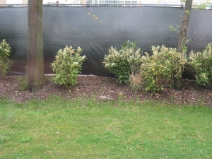 privacy for a chain link fence, shrubs, bushes