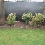 skip laurels, privacy fence