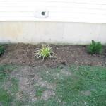 Day 2: Planting a Shade Garden