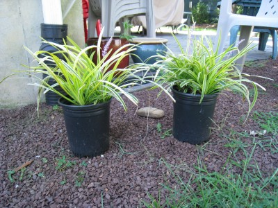 shade_garden_plants
