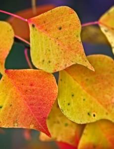 Fall Favorite Things