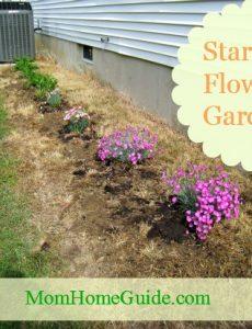 Starting a Flower Garden