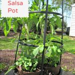 DIY Salsa Container Garden