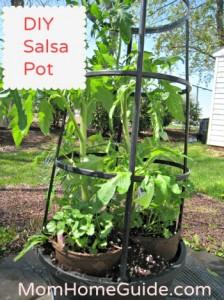 DIY, salsa, container, garden