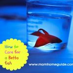 A New Betta Fish