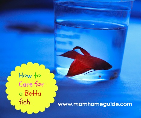 A new betta fish for Caring for a betta fish in a bowl