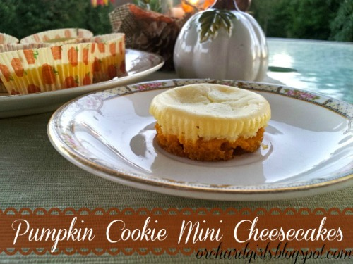 pumpkin cookie mini cheesecakes