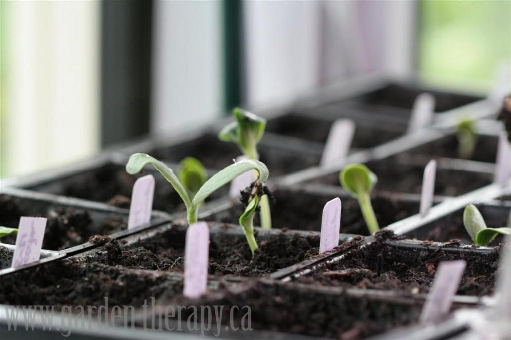 spring, seed, starting, garden