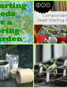 Spring Countdown: Seed Starting