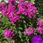 My Sunny Summer Garden
