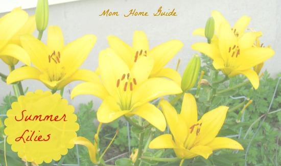 yellow, summer lilies, garden, perennial
