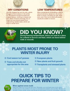 Winter Lawn Care Tips from TruGreen  #sponsored