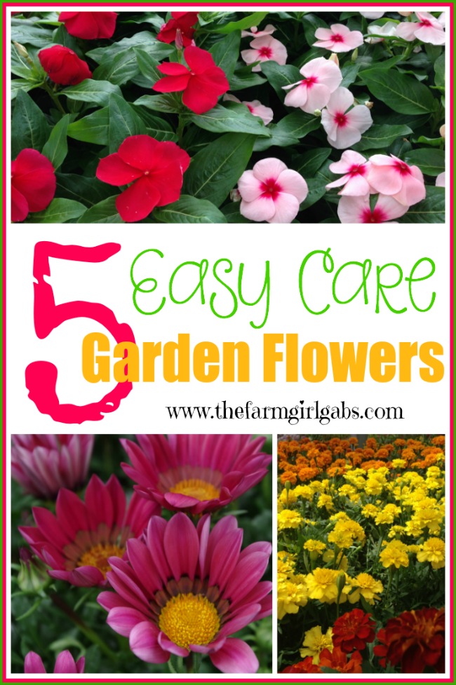 5 easy care garden flowers
