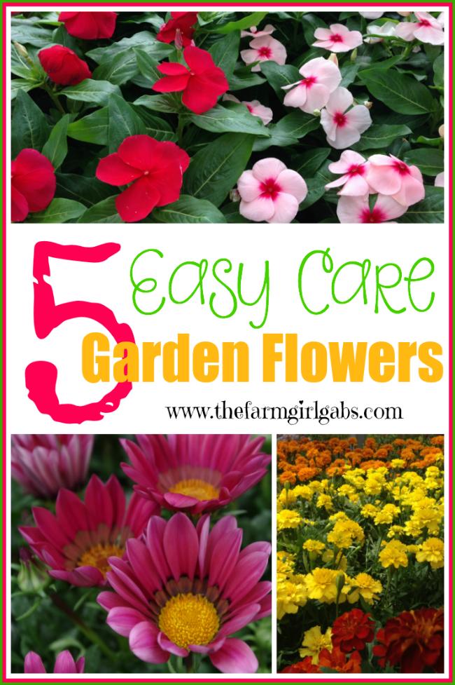 5 easy care garden flowers