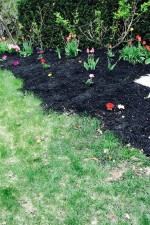 how to protect your spring annuals from frost