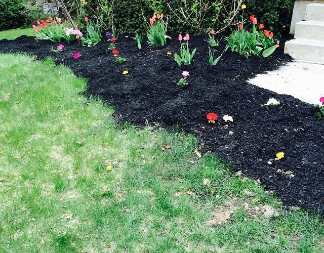 How to Protect Annuals from Frost