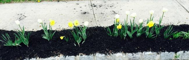 spring curbside garden