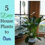 5 Easy to Grow House Plants