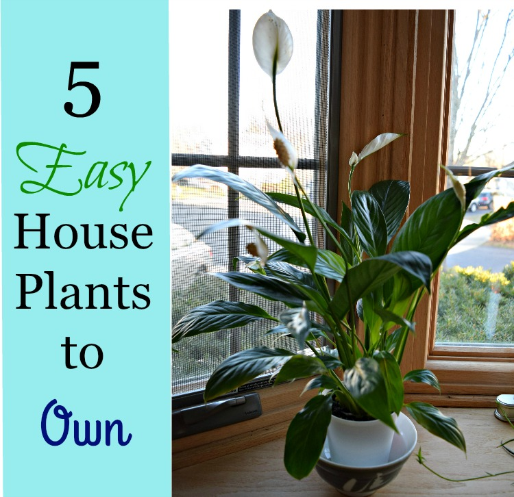 5 easy house plants to own