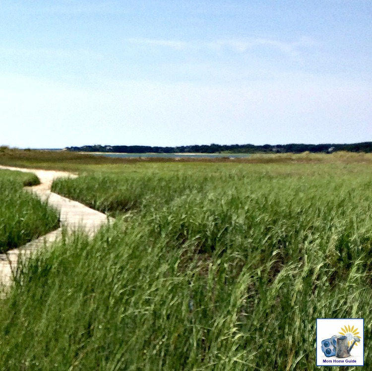 Salt marsh in Audubon Wildlife Preserve in Wellfleet, Mass.