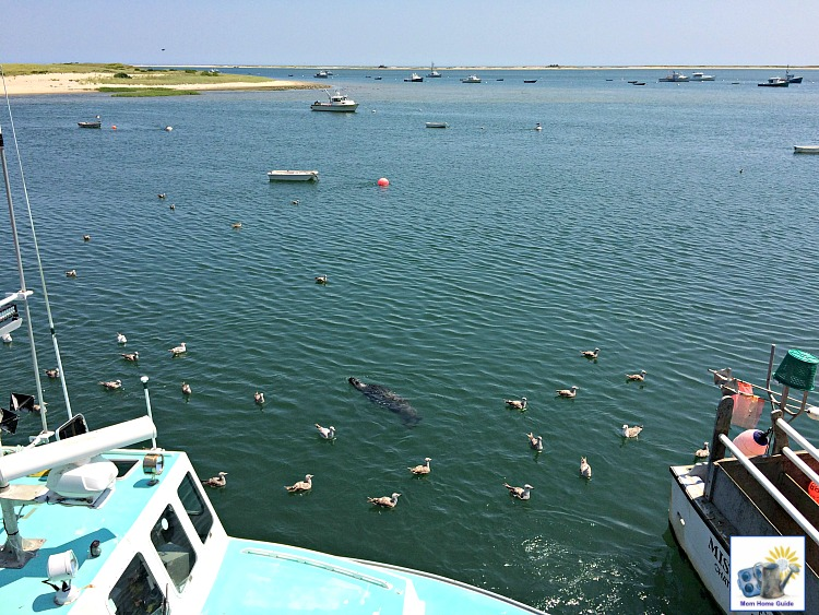 Chatham Pier Fish Market -- a great place to see fishermen feed scraps to the seals!