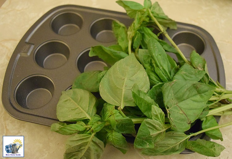How to use a mini muffin tin to preserve fresh basil. It's really quite easy!