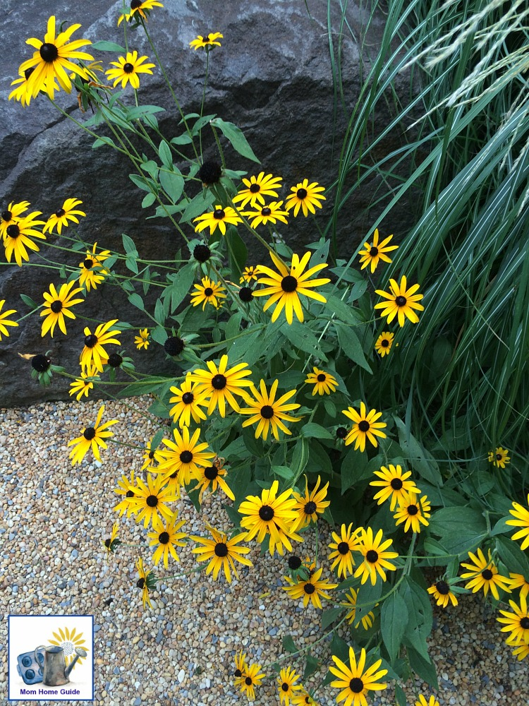 Beautiful yellow flowers at Sayen Gardens
