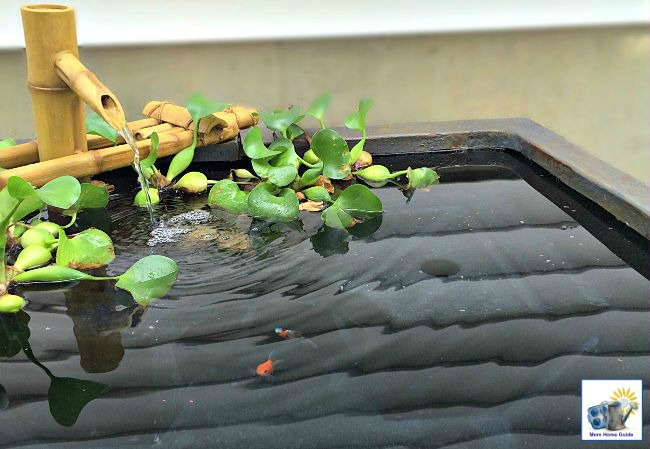 I love my easy to maintain patio pond, which holds my family's goldfish and flowering pond plants.