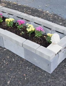 cinder block raised garden bed filled with mums