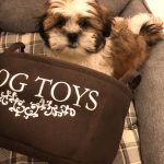 Must Haves for Your New Puppy