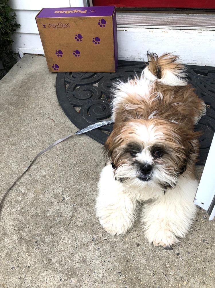 puppy with PupBox