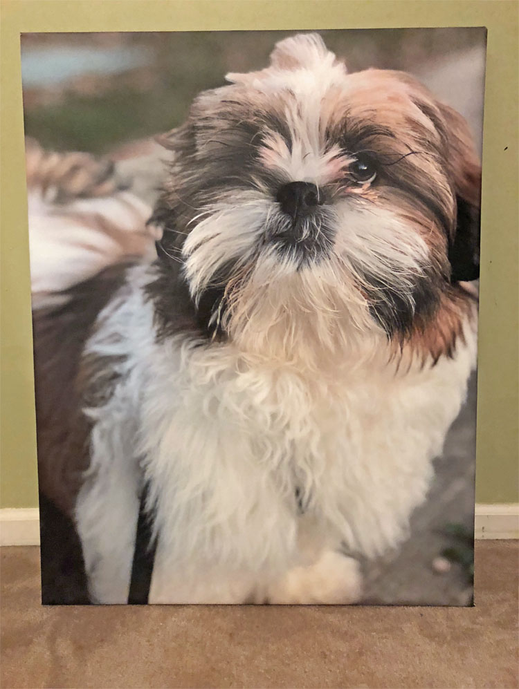 framed Shih Tzu puppy print made with PhotoWall.com