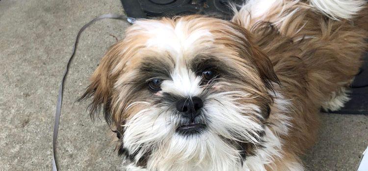 PupBox Dog Subscription Box Review