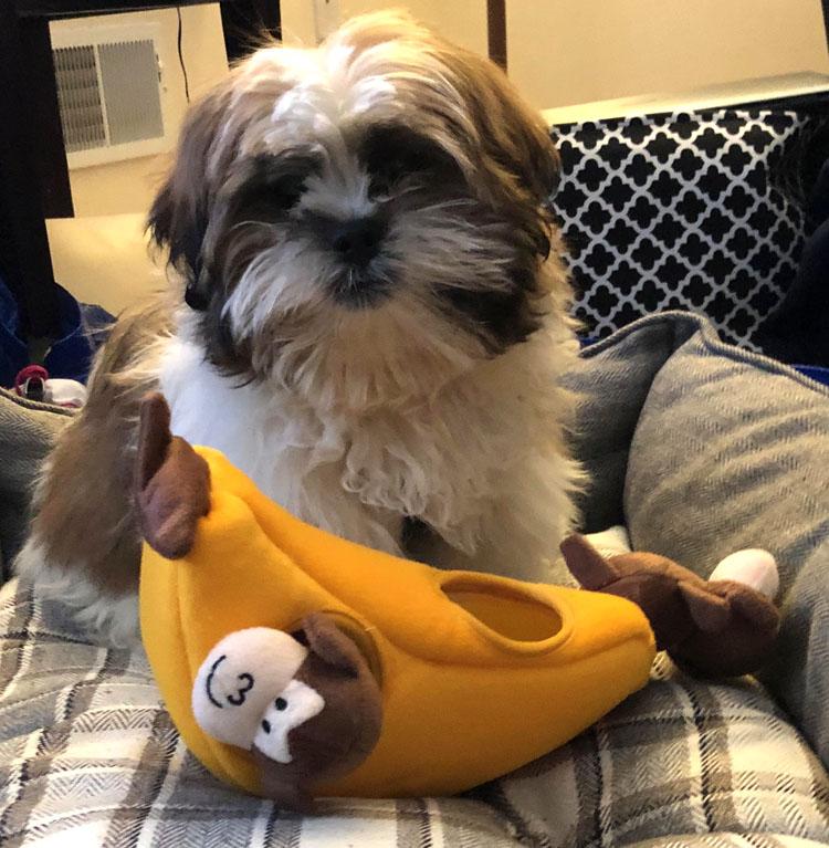 Zippy Burrow Monkey 'n Banana puppy toy
