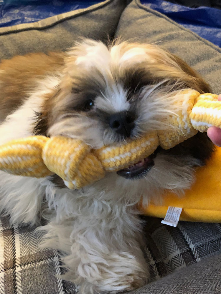The chenille rope in my puppy's latest PupBox. This rope is so nice and soft for puppy's tender gums