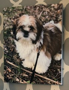 Canvas prints are reasonably priced at Canvas Factory -- this is a print of my Shih Tzu puppy
