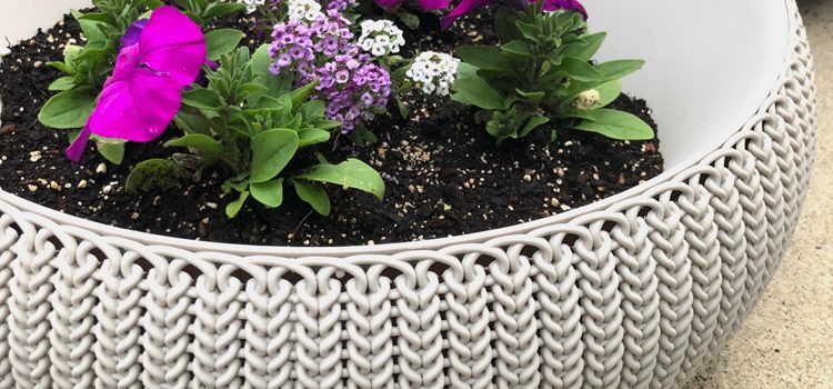Easy Care Summer Container Gardens — Pinterest Challenge Blog Hop