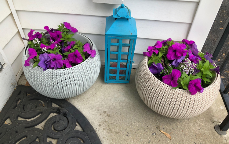 Resin planters with a knit texture and planted with petunia and alyssum flowers