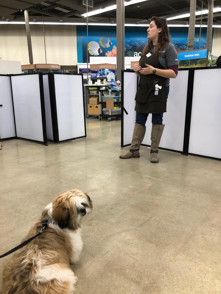 Shih Tzu puppy in puppy class