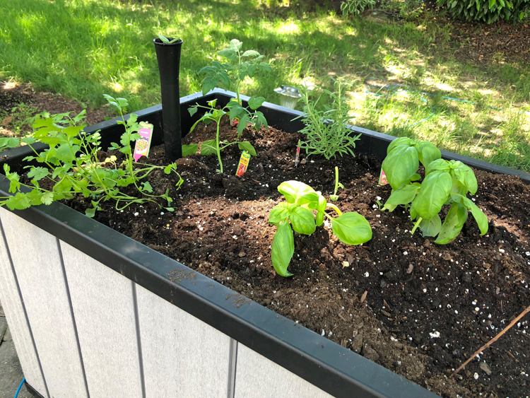 Keter raised patio garden planted with herbs and vegetables