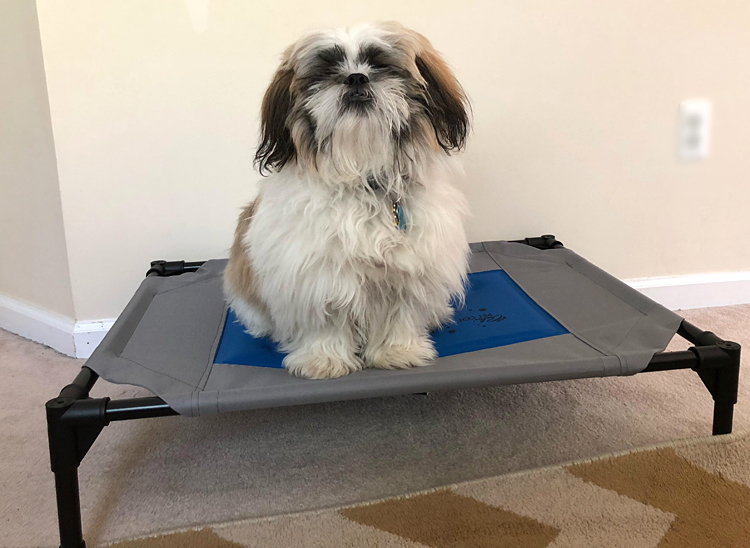 cute shih tzu pupy on a cooling dog pet cot