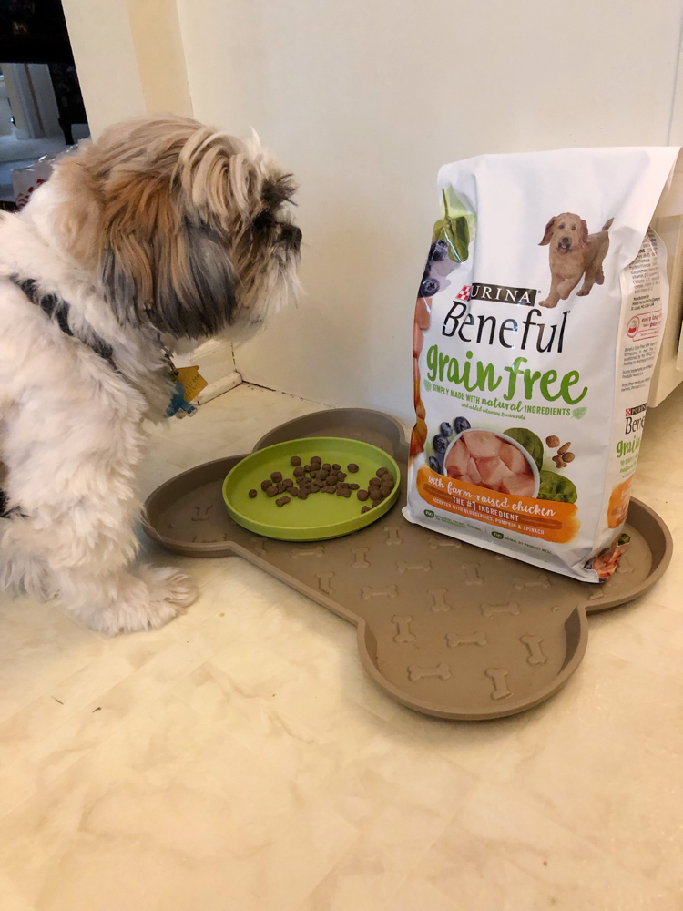 Shih Tzu puppy with grain free Beneful dry dog food