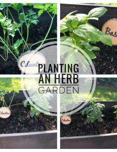 Planting an herb garden in a raised patio planter is a great idea. The herbs are kept away from rabbits and other critters and you can keep the herbs just outside your kitchen door.