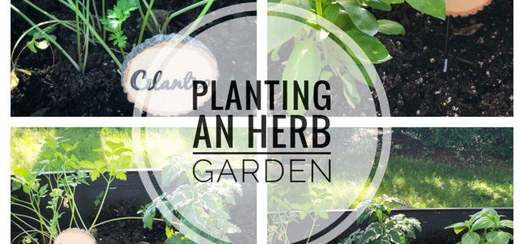 Summer Raised Herb Garden — Pinterest Challenge  Blog Hop