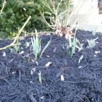 Readying a Spring Garden