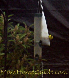a goldfinch on a thistle sock feeder