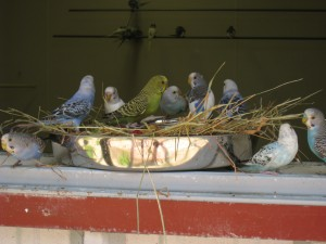 parakeets at Turtle Back Zoo
