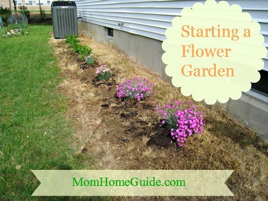 start, a flower garden