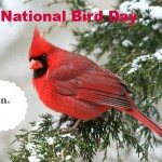 Celebrate National Bird Day