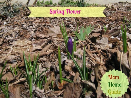 new, spring, flower